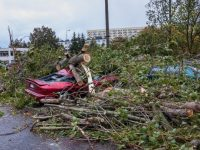 Fallen tree on car as an example of the need for comprehensive insurance