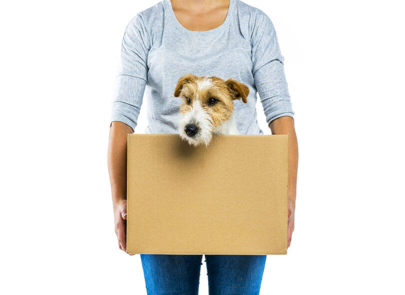 Dog in a box for moving houses image